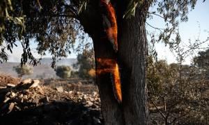 Συναγερμός στην Πυροσβεστική: Ποιες περιοχές βρίσκονται αύριο Πέμπτη σε κίνδυνο