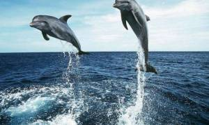 Ινστιτούτο Αρχιπέλαγος: Στα στομάχια δελφινίων καταλήγουν τα πλαστικά απορρίμματα