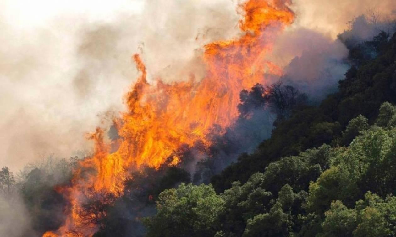 Πυρκαγιά σε πυκνόφυτη περιοχή Ελαίας Γορτυνίας, στην Αρκαδία