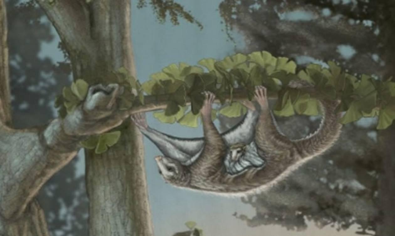 Ανακαλύφθηκαν τα αρχαιότερα θηλαστικά - αιωροπτεριστές που ζούσαν προ 160 εκατ. ετών