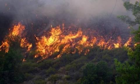 На острове Закинфос бушует крупный пожар