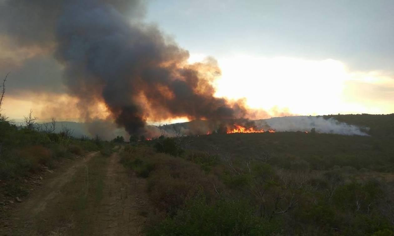 Φωτιά: Υπό μερικό έλεγχο η πυρκαγιά στα Αμπέλια Αγρινίου