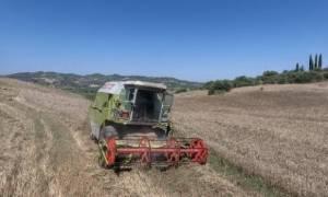 Παράταση ενός έτους για την εξαγορά δασικών εκτάσεων