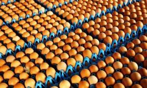 Συναγερμός για τα μολυσμένα αβγά και στην Ισπανία