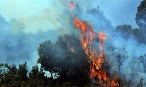 Λασίθι: Υπό μερικό έλεγχο η φωτιά στο Στόμιο Ιεράπετρας