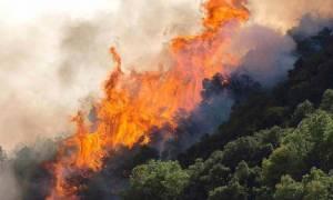 Είδηση – «βόμβα»: Τι κρύβεται πίσω από το μπαράζ πυρκαγιών στη χώρα μας