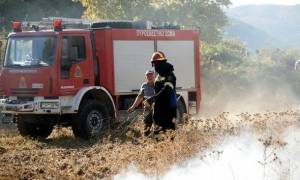 Φωτιά ΤΩΡΑ σε δασική έκταση στην Αμαλιάδα (pic)