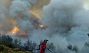 Ποιοι κρύβονται πίσω από τις φονικές πυρκαγιές