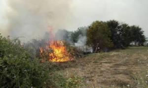 Φωτιά ΤΩΡΑ: Δύο νέα μέτωπα στο Μαραθώνα - Προβληματισμός στις Αρχές