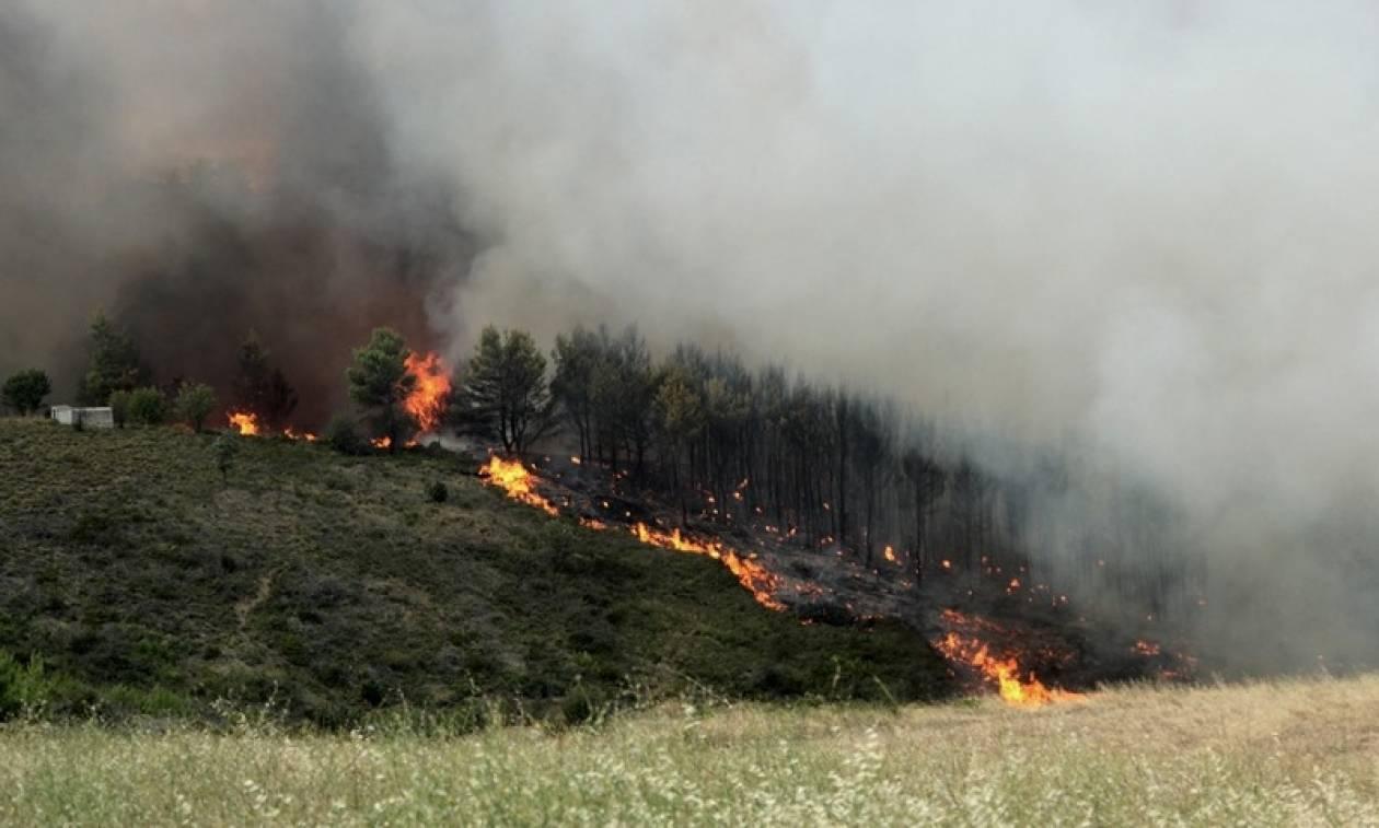 Ποτάμι για τις φωτιές: Ανύπαρκτος ο Τόσκας