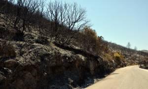 Φωτιά Ζάκυνθος: Σε Καταστάρι και Κοιλιωμένο τα επικίνδυνα μέτωπα (pics)