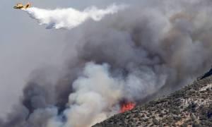 Φωτιά ΤΩΡΑ: Πύρινος εφιάλτης σε Ζάκυνθο και Ηλεία (pics & vid)