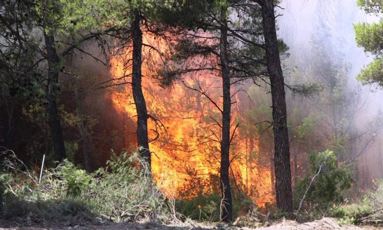 Φωτιά ΤΩΡΑ: Τεράστιο μέτωπο φωτιάς προς Μαλακάσα