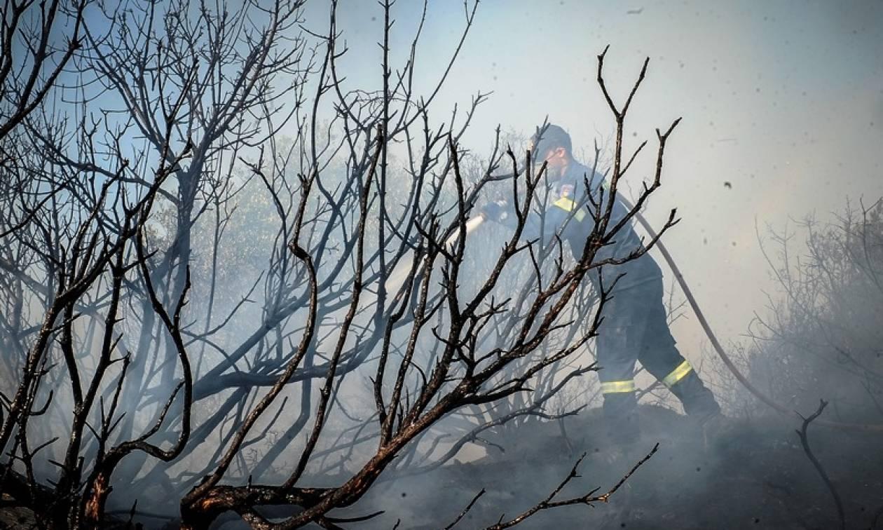Φωτιά Ηλεία: Νύχτα αγωνίας στο Περιστέρι - Οι κάτοικοι αρνούνται να εγκαταλείψουν τα σπίτια τους
