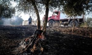 Φωτιά Live - Προσοχή: Σε ποιες περιοχές είναι υψηλός ο κίνδυνος πυρκαγιάς