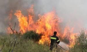 Φωτιά ΤΩΡΑ: Σε εξέλιξη πυρκαγιά στις Αρχάνες Ηραλείου