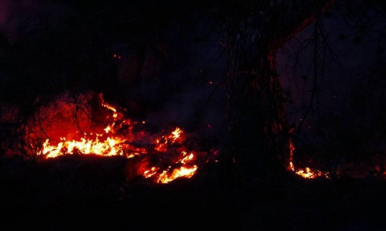 Φωτιά Λάρισα: Πυρκαγιά στο Κόκκινο Νερό
