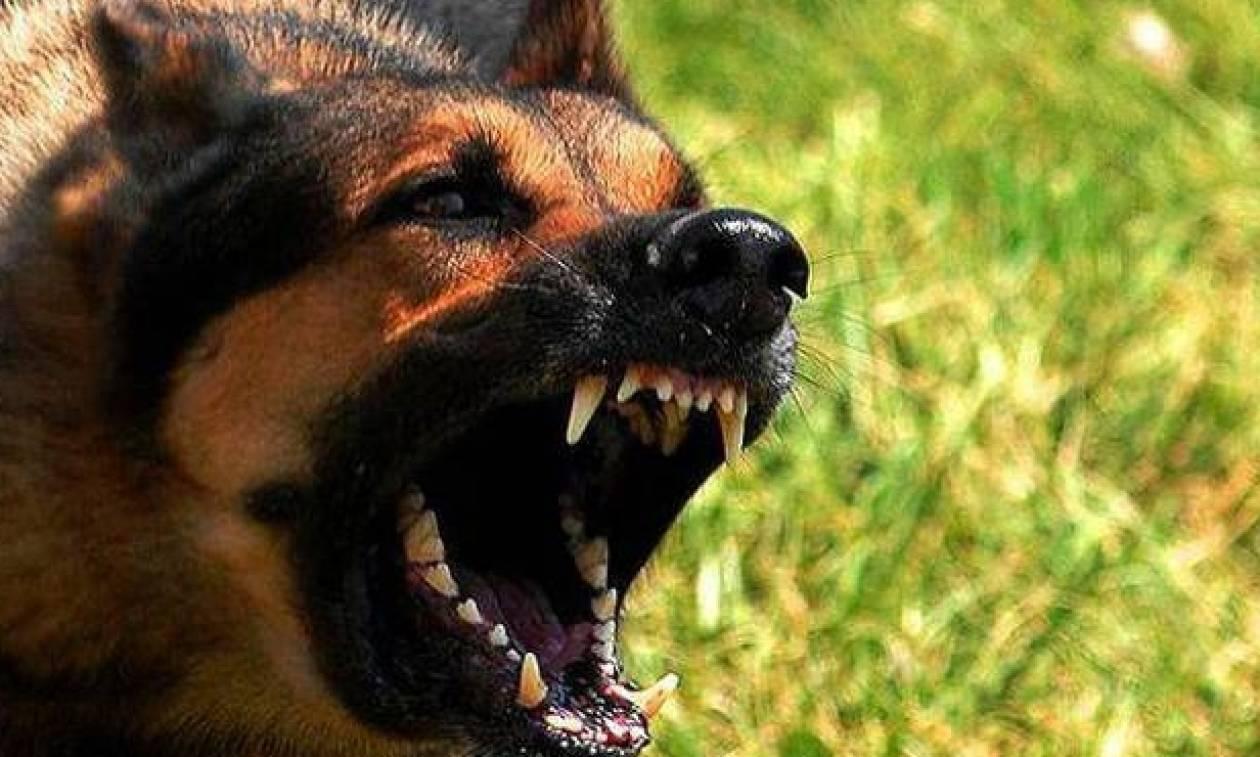 Σκληρές εικόνες: Σκυλιά επιτέθηκαν σε πρώην αστυνομικό - «Ήθελαν να με δαγκώσουν στο λαιμό» (pics)