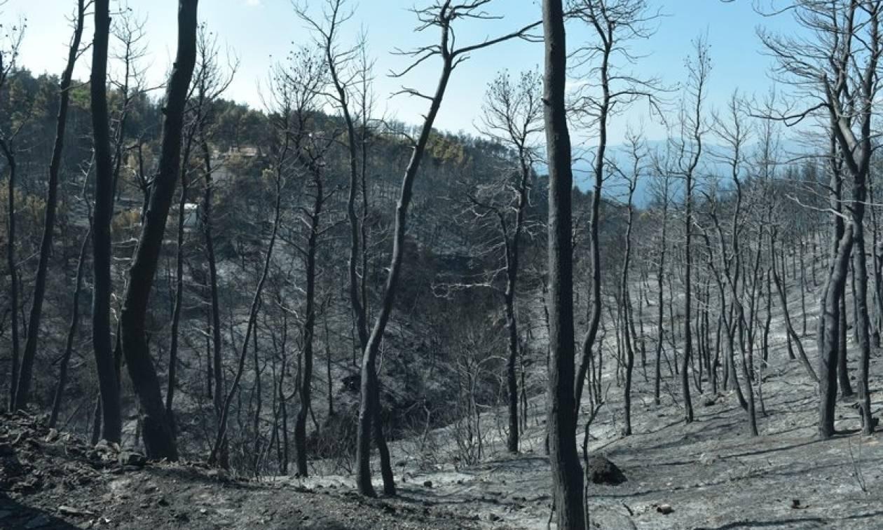 Σε λειτουργεία το δορυφορικό σύστημα «Κοπέρνικος» για τις καμένες εκτάσεις