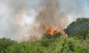 Φωτιά: Σε ύφεση η πυρκαγιά στο Μαρκόπουλο – Περιορίστηκε το μέτωπο στην Κυπαρισσία