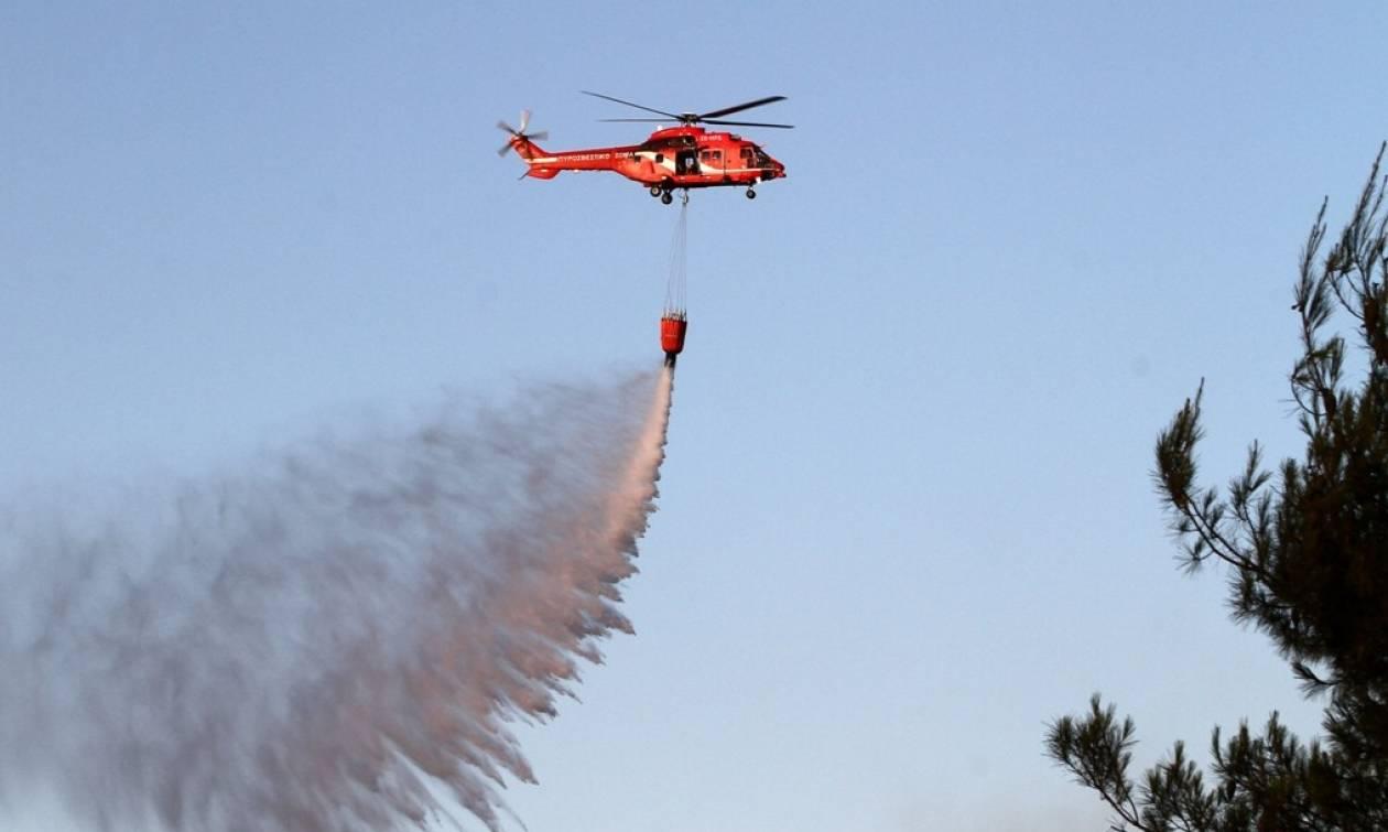 Φωτιά ΤΩΡΑ: Πυρκαγιά στην Χρυσοκελλαριά Μεσσηνίας