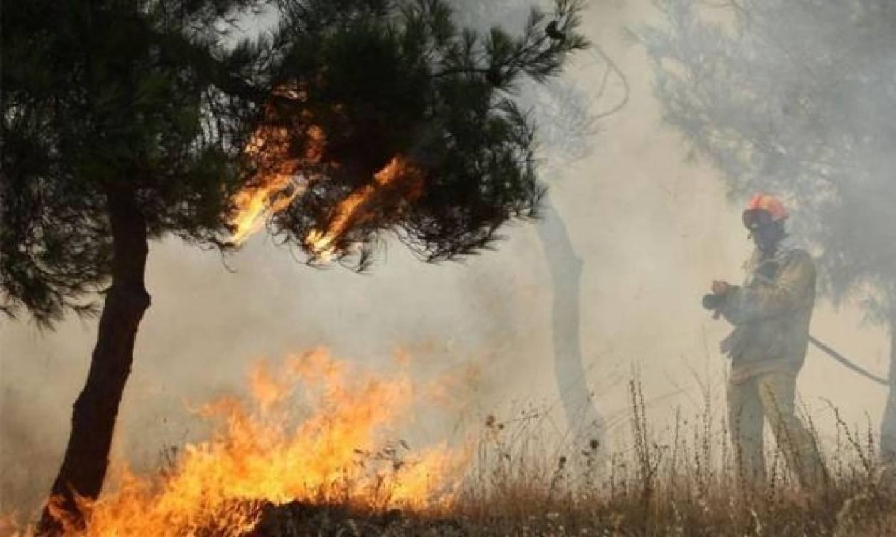 Φωτιά σε δάσικη έκταση στο Καθαροβούνι Άρτας