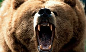 Αρκούδα επιτέθηκε σε άνδρα στη Φλώρινα