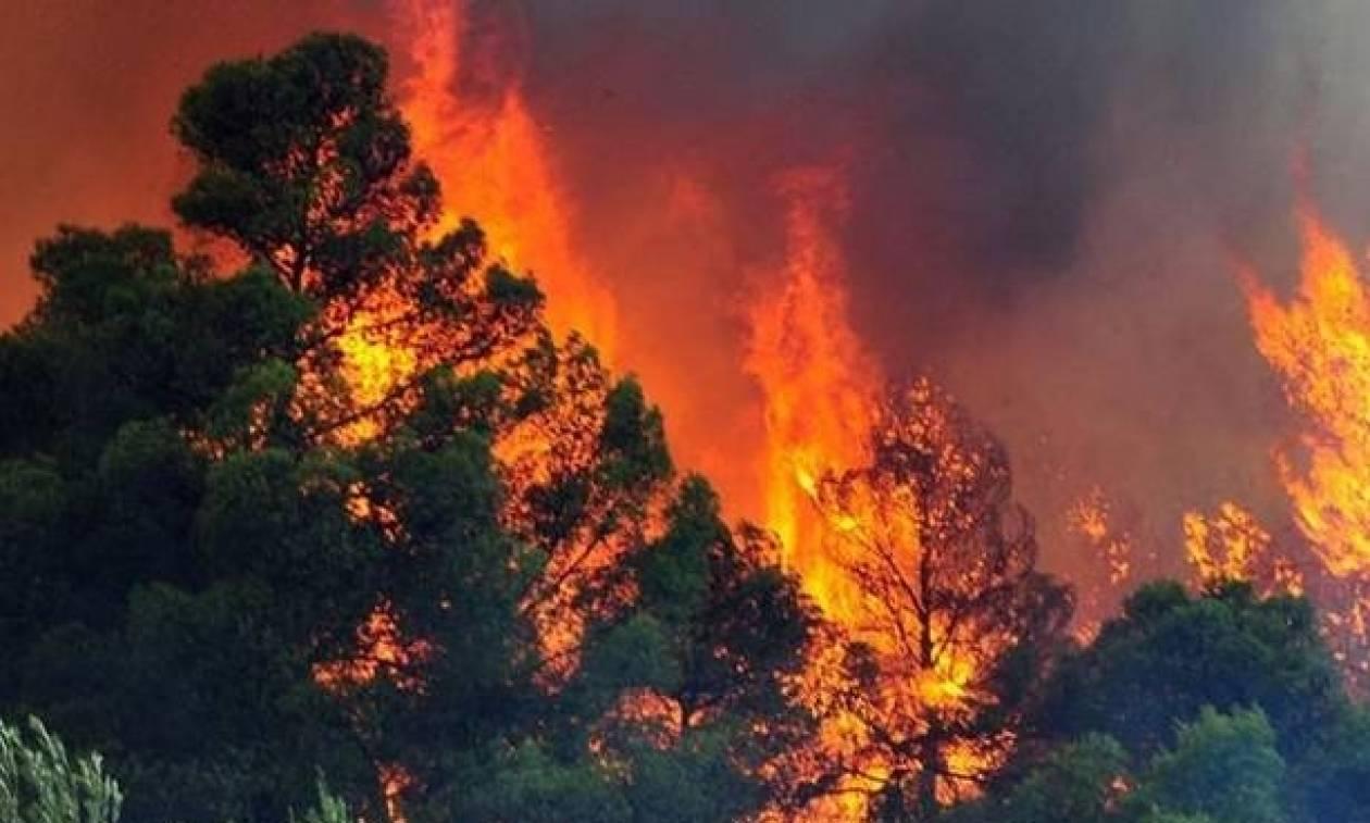 Συναγερμός για φωτιά στο Μαρκόπουλο