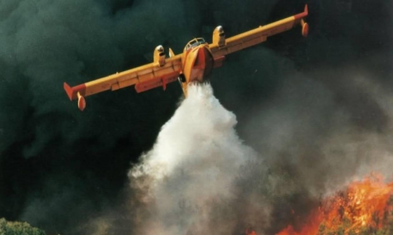 Φωτιά στα Ροδινά της Ζαχάρως: Βίντεο που κόβει την ανάσα - Η εντυπωσιακή «βουτιά» Canadair