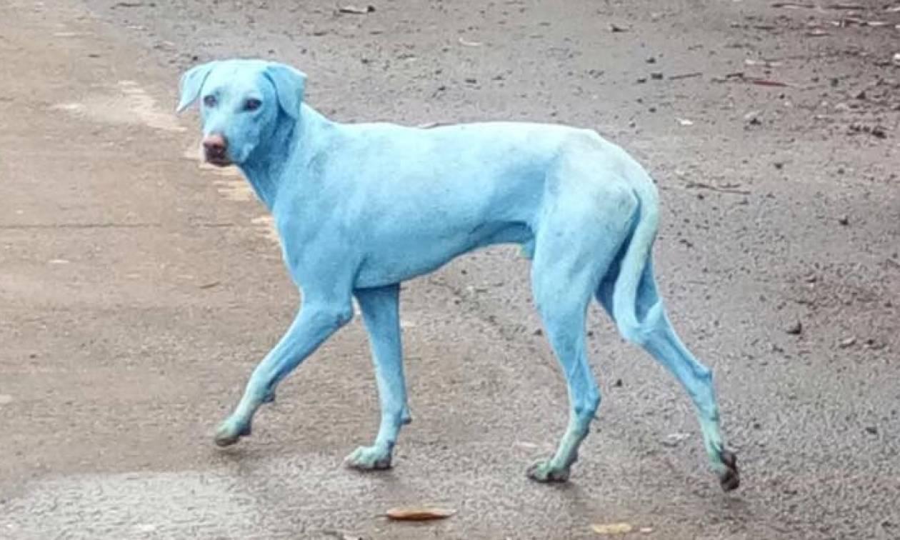 Φρίκη: Σκυλιά βάφτηκαν μπλε από βιομηχανικά απόβλητα (vid)