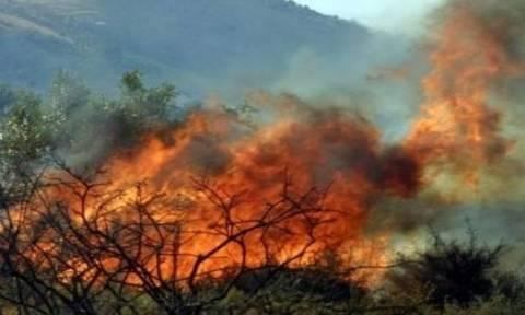 Major wildfire near tourist resort in Dafnila on Corfu