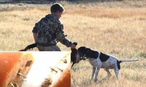 Κτηνωδία! Δεκάδες σκυλιά βρήκαν φρικτό θάνατο - Τους έριχναν σεφταλιές με λεπίδες