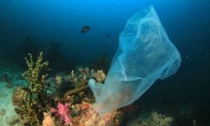 Πόσο επικίνδυνη μπορεί να είναι μια πλαστική σακούλα; Πολύ περισσότερο από όσο νομίζατε