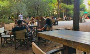 Τρομερή καφετέρια! Βρίσκεται στην πιο πράσινη γωνιά της Αθήνας!