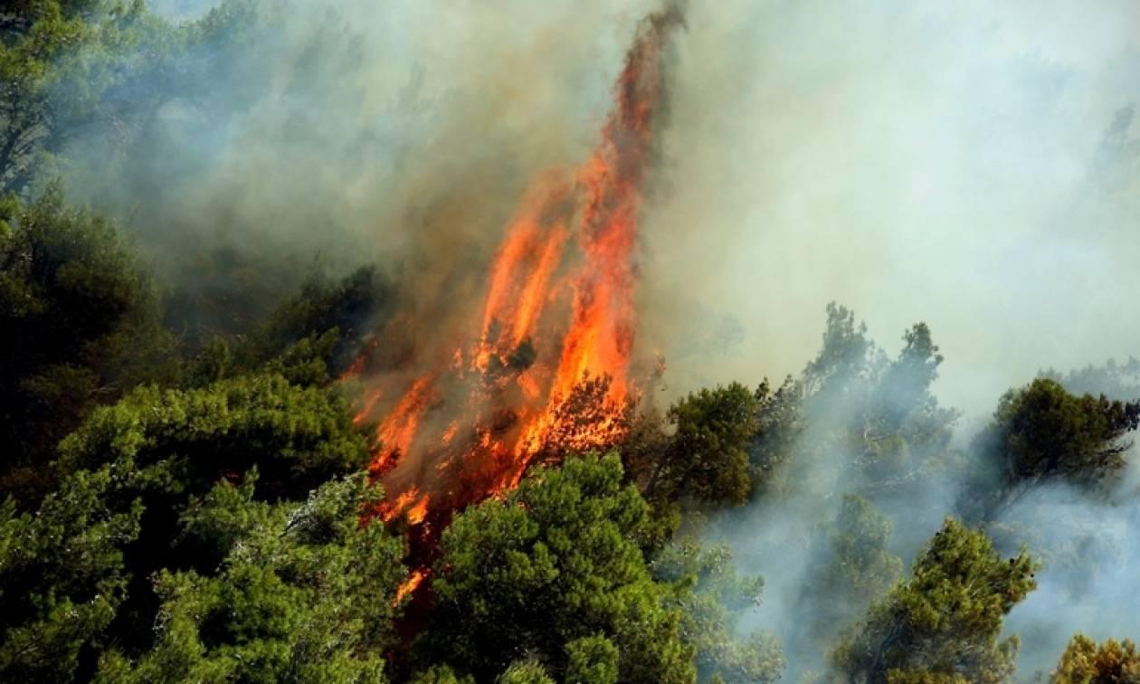 Φωτιά LIVE: Πυρκαγιά απειλεί την Καρύταινα Αρκαδίας