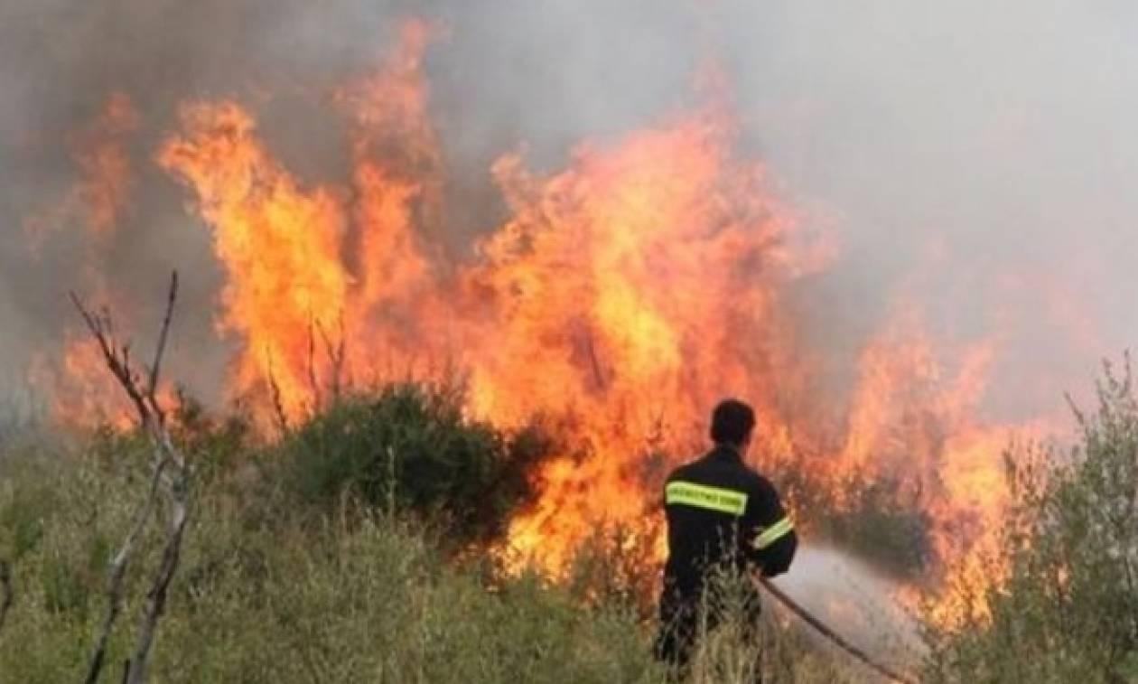 Συγκλονιστικές εικόνες από τη φωτιά στα Ιωάννινα - Κινδύνευσαν σπίτια (pics+vid)