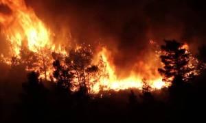 Φωτιά ΤΩΡΑ στα Μέγαρα