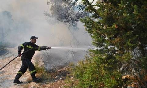 Wildfire breaks out in Amaliada, in Ilia