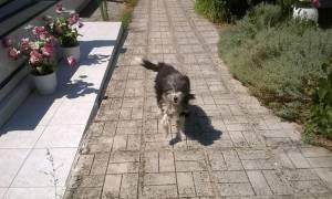 Ο «Χάτσικο» των Ιωαννίνων: Σκύλος μένει στο νεκροταφείο περιμένοντας το αφεντικό του