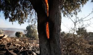 Σε επιφυλακή η Πυροσβεστική για νέες φωτιές - Ποια η κατάσταση των πύρινων μετώπων σήμερα Τρίτη