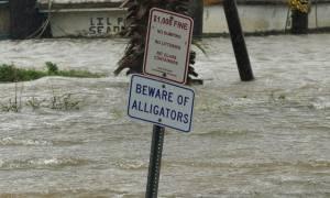 Καταιγίδα Χάρβεϊ: Αλιγάτορες «βολτάρουν» σε αυλή σπιτιού - Τουλάχιστον 20 νεκροί (pics+vid)