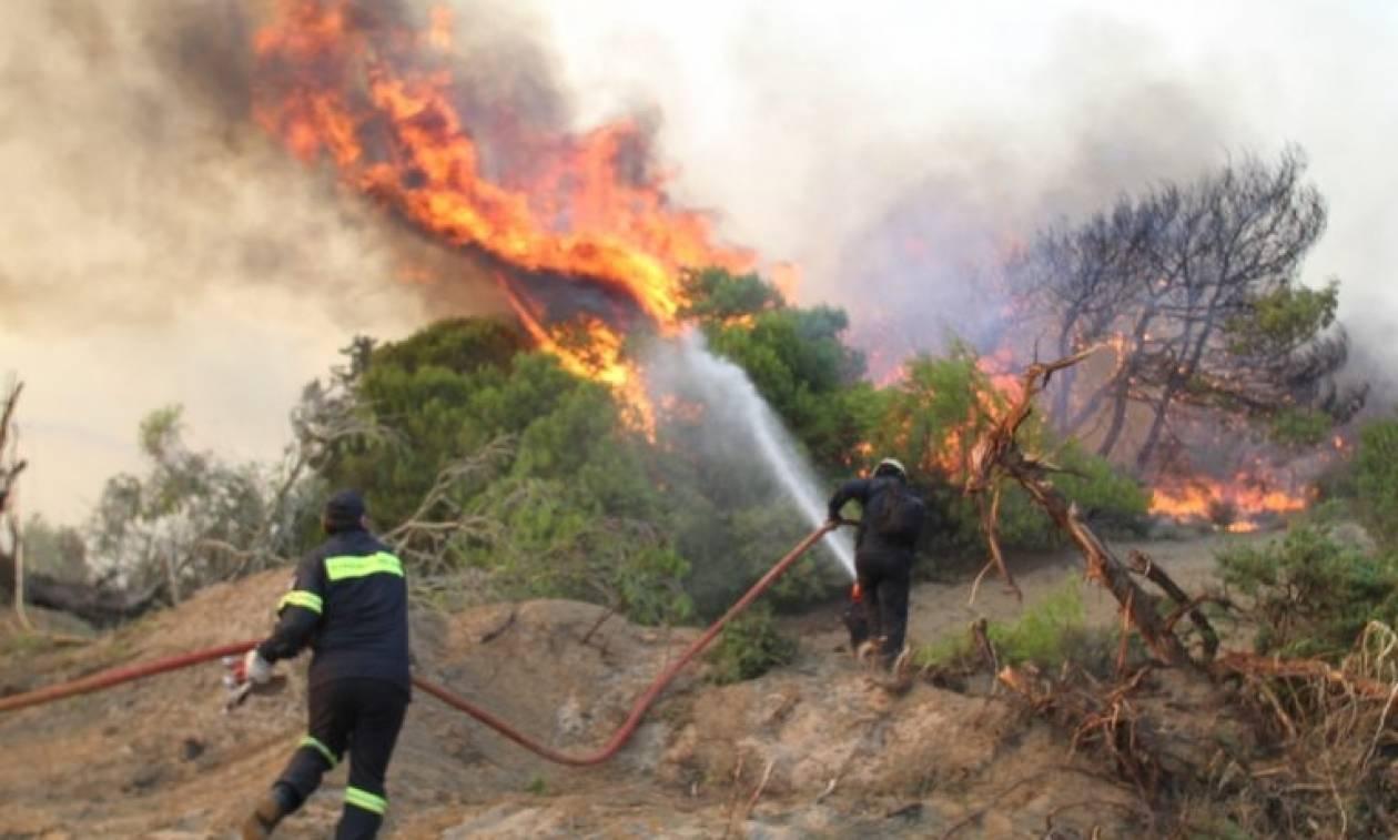 Φωτιά στην Εύβοια: Σε εξέλιξη πυρκαγιά σε δασική έκταση στην Ιστιαία