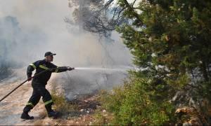 Ζάκυνθος: Μέτρα προστασίας των καμένων δασών – Αποζημιώσεις για τους πληγέντες