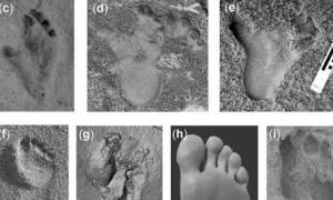 Σπουδαία ανακάλυψη: Στην Κρήτη τα πρώτα ίχνη βάδισης του ανθρωπίνου είδους (pics)