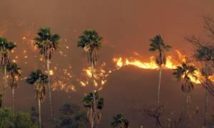 Τεράστια πυρκαγιά στο Λος Άντζελες: Εκκενώθηκαν περισσότερα από 500 σπίτια (vid)