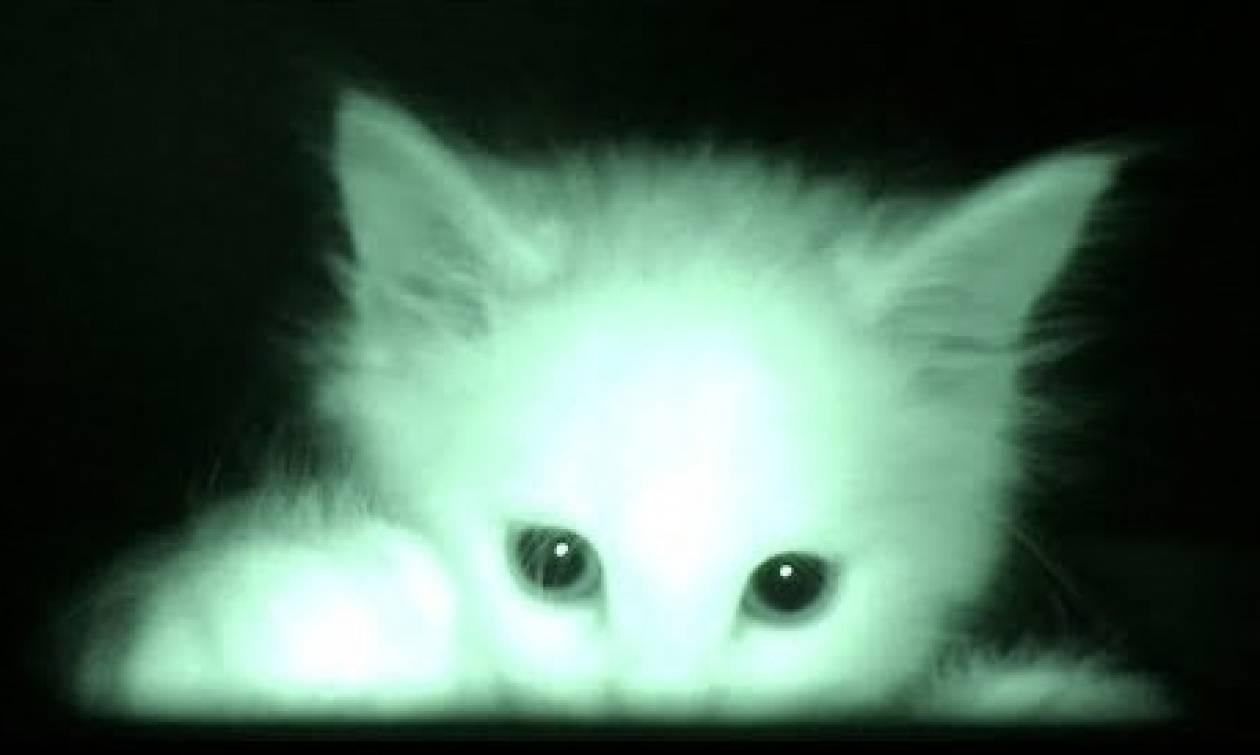 Τα γατάκια του το έριχναν στον ύπνο όλη μέρα. Οταν έβαλε κάμερα τη νύχτα, κατάλαβε το γιατί... (Vid)