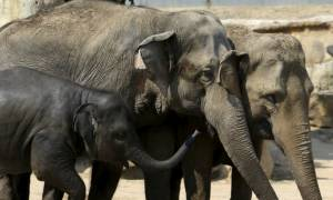 Προσπάθησε να βγάλει selfie με ελέφαντα και βρήκε φρικτό θάνατο