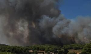 Πυρκαγιά ΤΩΡΑ: Καίγεται πευκοδάσος στην Αλεξανδρούπολη