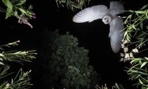 Όταν η φύση έχει κέφια: Οι πιο εντυπωσιακές φωτογραφίες των βραβείων BTO