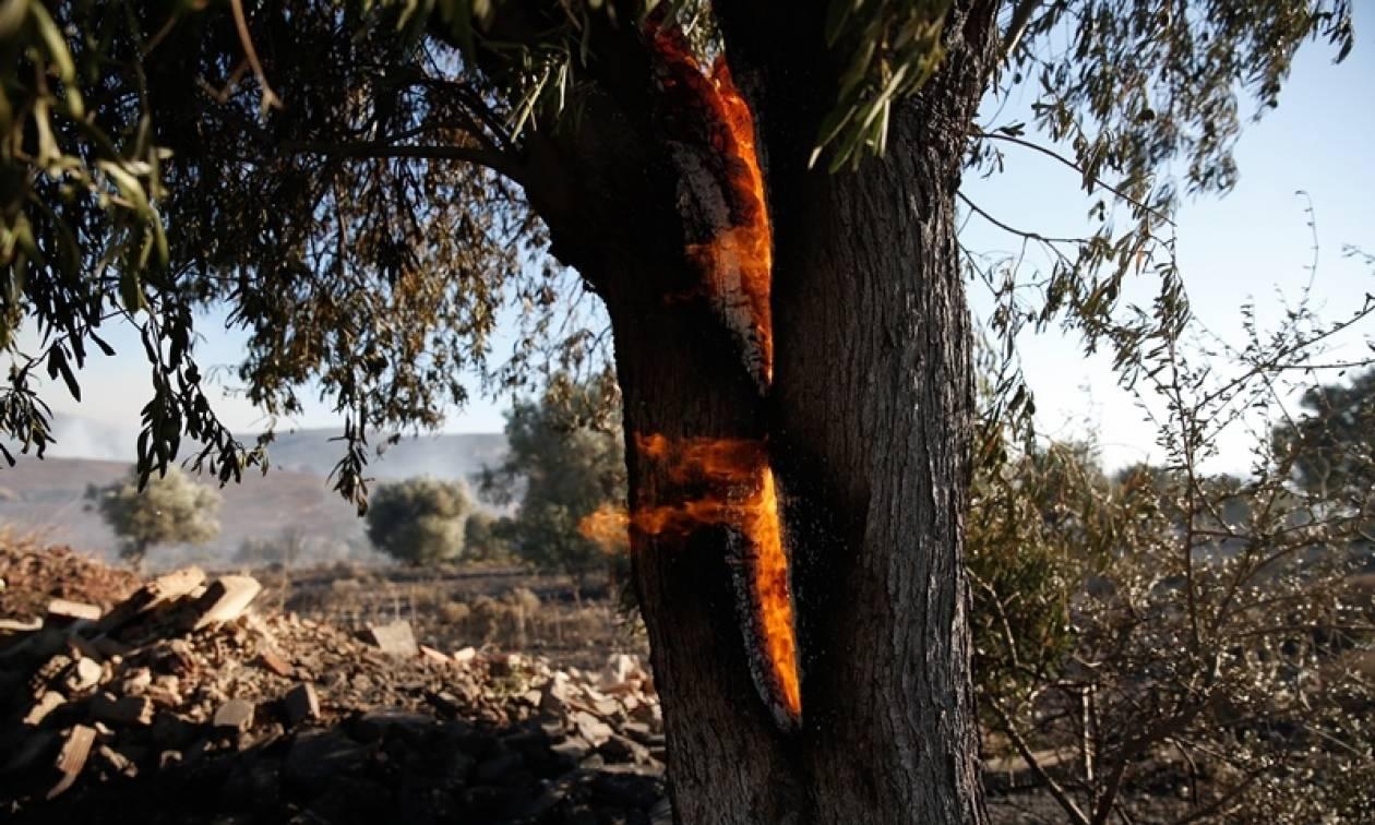 Κίτρινος συναγερμός: Πού είναι υψηλός σήμερα (07/09) ο κίνδυνος πυρκαγιάς